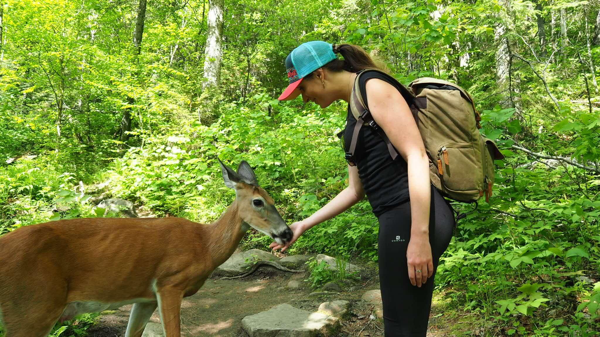 bichesur le sentier du Loup dans le parc national de la Jacques-Cartier