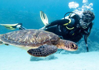 10 expériences à vivre à l'Île Maurice